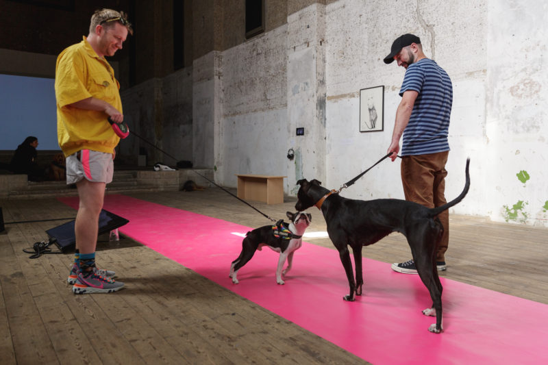 英国活动 DOG SHOWCONTEMPORARY ART. CHOSEN BY DOGS. FOR DOGS AND HUMANS.